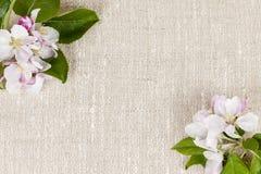 Leinenhintergrund mit Apfelblüten Stockbilder