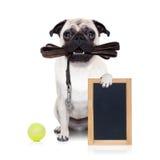 Leinenhund bereit zu einem Weg Stockfotografie