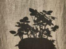 Leinenvorhang und Raum stiegen Schatten 2 stockfoto