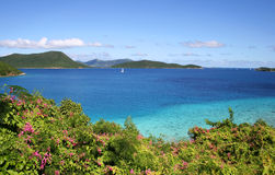 Leinster Bay Vista. Sea scape with close-up flowers on the Caribbean island of St John stock images