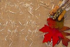 Leinwand mit Blättern und indischem Mais lizenzfreie stockfotografie