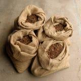 Leinwand-Zufuhr-Taschen voll von Kegeln Tamarck-Lärchen-(Larix laricina) Stockbild