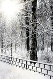 Leiser snow-covered städtischer Park im Winter Stockfotos