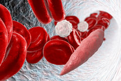 Leishmania parasite in blood. Promastigotes of Leishmania parasite which cause leishmaniasis in blood with red blood cells and leukocytes, 3D illustration Stock Photos