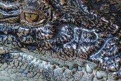 Leistenkrokodil, Abschluss oben eines Auges und Zähne Bali-Zoo indonesien stockfoto