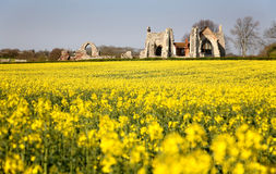Leiston Abbey Suffolk. With Rape Field Royalty Free Stock Photo