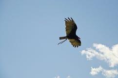 Leistung der Falken im Flug Stockfotografie