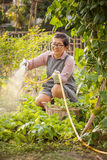 Leisure activities of asian woman in home vegetable garden Royalty Free Stock Image