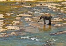 Elephant wild leisure Royalty Free Stock Images
