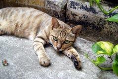 Leisure cat Royalty Free Stock Photo