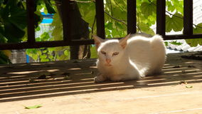 Leisure time of the white cat Royalty Free Stock Photography