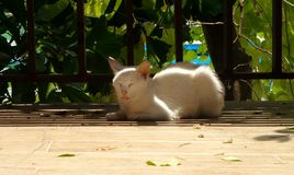 Leisure time of the white cat Stock Images