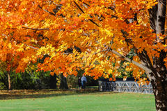 Leisurely Walk Through Park On A Sunny Autumn Day Stock Photography