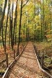 Leisurely walk through the woods Royalty Free Stock Photos
