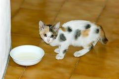 Leite bebendo do gatinho Foto de Stock Royalty Free
