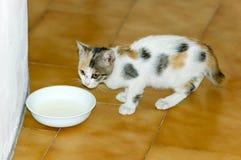 Leite bebendo do gatinho Fotografia de Stock Royalty Free