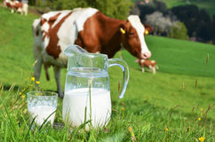 Leite e vaca Imagens de Stock