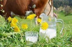 Leite e vaca Fotografia de Stock