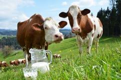 Leite e vacas Fotografia de Stock Royalty Free