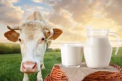 Leite no jarro e no vidro com vaca Imagem de Stock