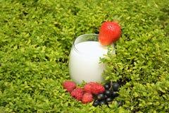 Leite orgânico com fruta Imagens de Stock