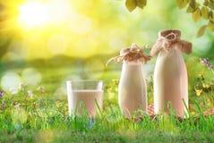 Leite orgânico na grama em um prado ensolarado com flores fotografia de stock royalty free