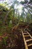 Leiter auf einer Wanderung Stockbild