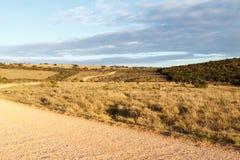 Leitlinien - Addo Landscape Stockfoto