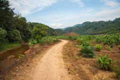 Leito fluvial com maré baixa e uma estrada secundária na floresta tropical do santuário de Khao Sok Fotos de Stock Royalty Free
