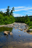Leito fluvial na floresta nacional da montanha branca Foto de Stock Royalty Free
