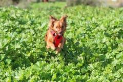 Leitoso o cão fotografia de stock