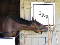 Leitplan-Pferdehafen Saratoga lizenzfreie stockbilder