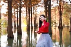 Leitura da jovem mulher na floresta do Metasequoia do outono imagem de stock