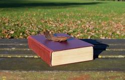 Leitura no parque em um dia do outono Fotografia de Stock