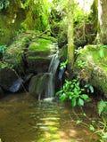 Leje się w południe - afrykański Miejscowy las, Hogsback obraz stock