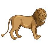Lejon Arkivbild