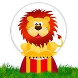 Lejon i cirkusen Royaltyfri Foto