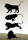 Lejon i olikt poserar Arkivbild