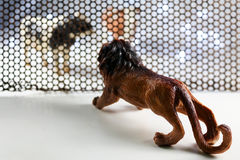 Lejon- och komodellen Arkivbild