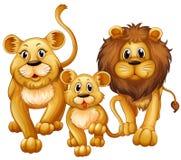 Lejon på familjen med den gulliga gröngölingen Arkivfoton