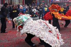 Lejon som dansar på de spenderade brandsmällarna Arkivbilder