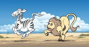 Lejon som jagar en sebra Arkivfoton