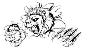 Lejon som klöser till och med väggen Arkivfoto