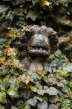 Lejon vid stenen Arkivbilder