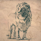 Lejonet skissar teckningen på skrynkligt texturpapper Royaltyfria Bilder