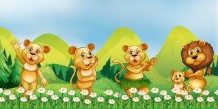 Lejonfamilj i blommafältet Arkivbild