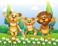 Lejonfamiljanseende i blommafältet Royaltyfria Foton