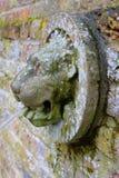 Lejonhuvudskydrag i en engelsk trädgård royaltyfria bilder