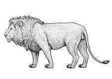 Lejonillustration, teckning, gravyr, färgpulver, linje konst, vektor Royaltyfri Illustrationer