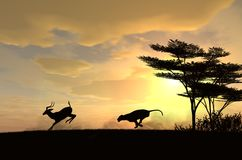 Lejoninnan jagar en impala på solnedgången Royaltyfria Foton